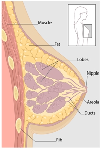 Medical Breast Image - Khartoum Breast Care Centre
